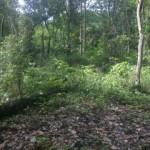 Bushy trail
